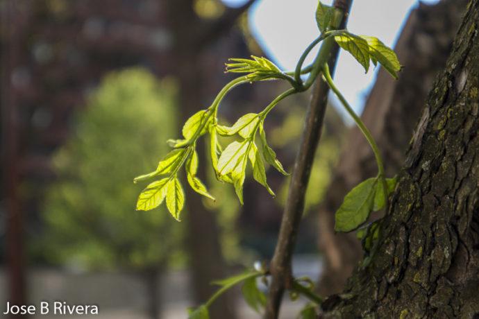 Branch Flower2